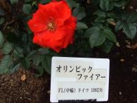 2015-09-19-秋バラ園ー157