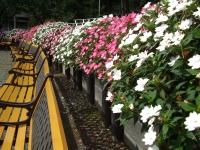 2015-09-19-秋バラ園ー177