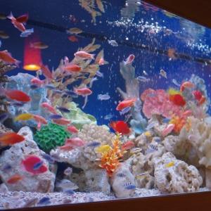 色とりどりの魚