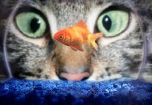 🐱と金魚観察jpg