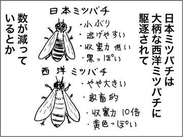 kfc00423-4