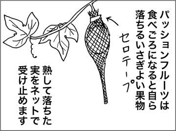 kfc00431-5