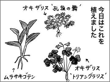 kfc00435-3
