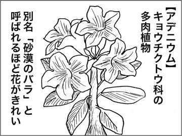 kfc00438-4