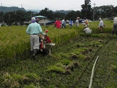 耕運機での稲刈り結束