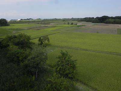 収穫期の田