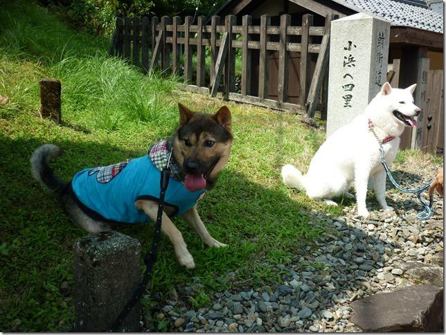 201508福井滋賀3-16