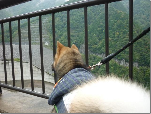 201510ダム散歩徳山ダム1-07