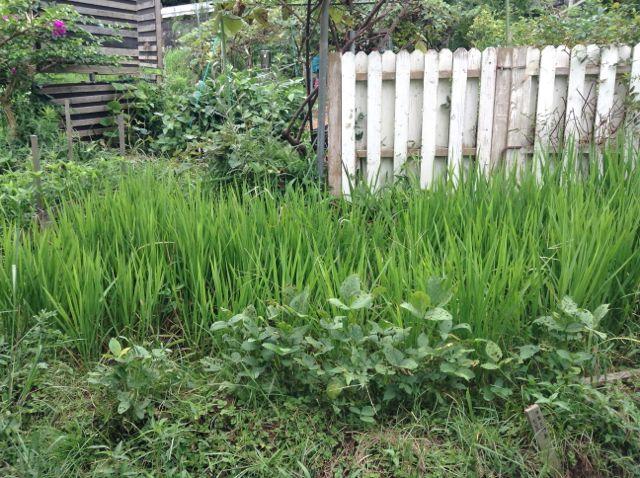 8:24・稲と大豆