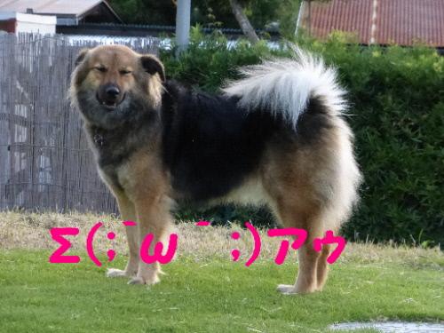 P1090859(1).jpg