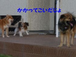 P1090873(1).jpg