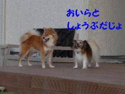 P1090874(1).jpg