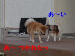 P1090875(1).jpg