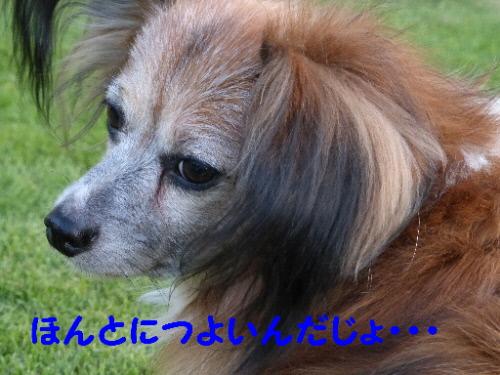 P1090895(1).jpg