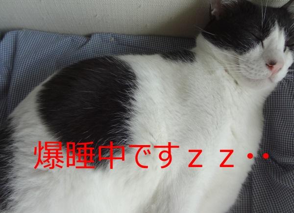 DSC04785.jpg