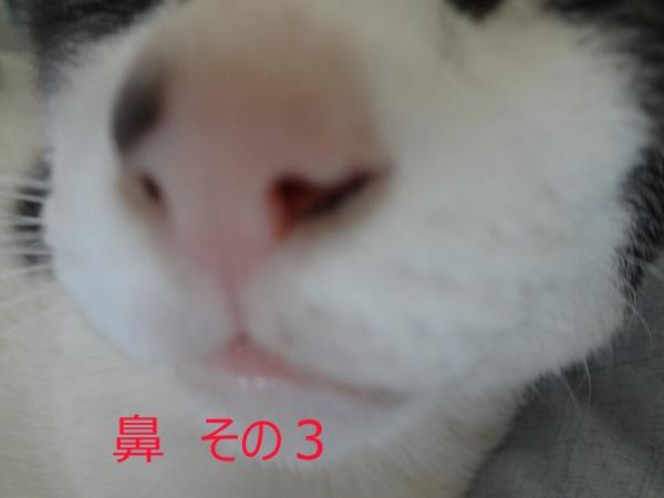 DSC05754.jpg