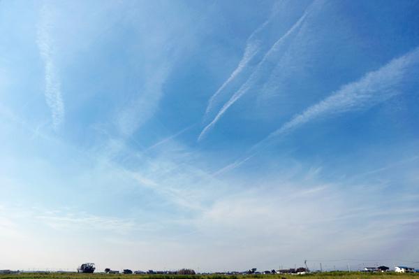 空は高く青いのに、下は塩害で大変