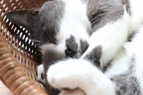 しっぽつかんで寝てる寝♪