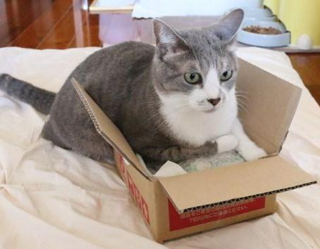 箱も捨てがたい!