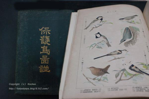 保護鳥図譜