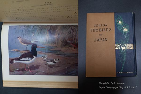 日本鳥類図説