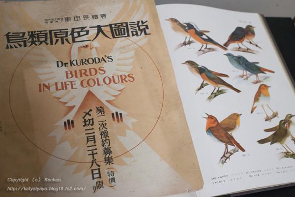 鳥類原色大図説