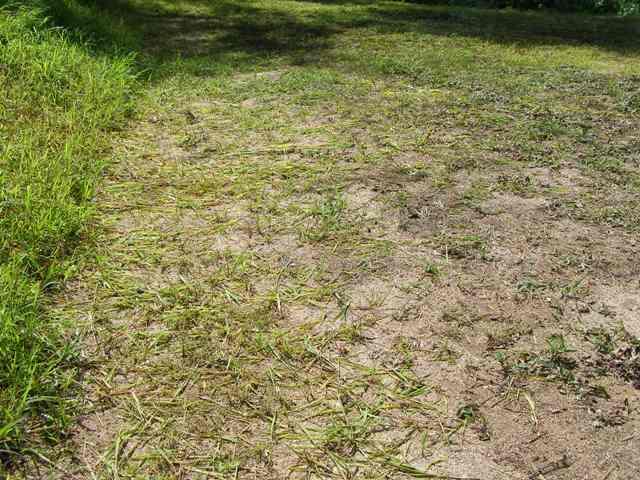 草刈0826
