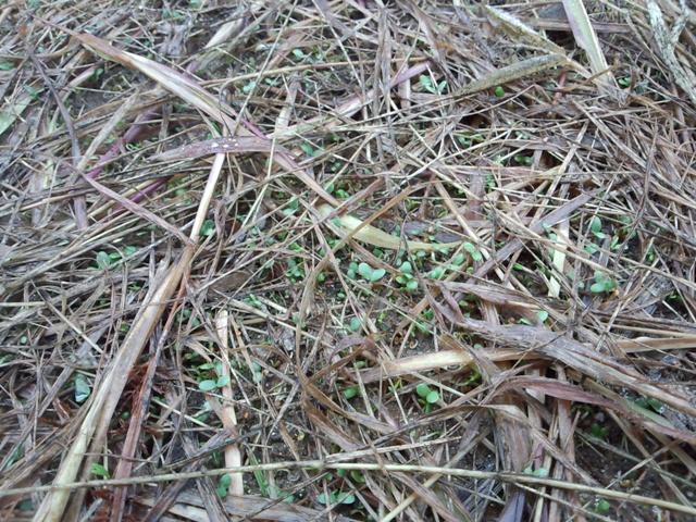 草の絨毯の跡0826