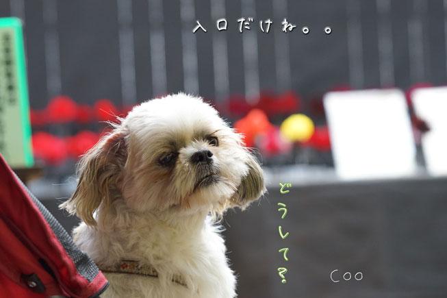 09-11_3773.jpg