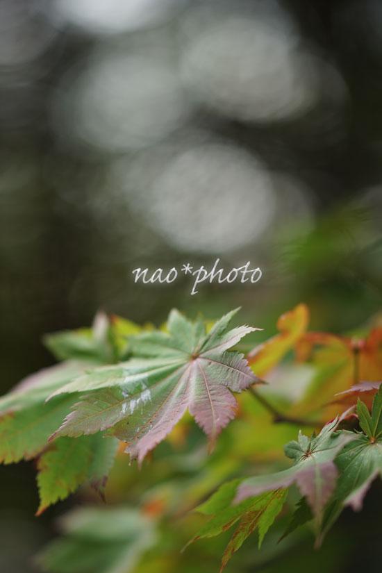 09-24_4090.jpg