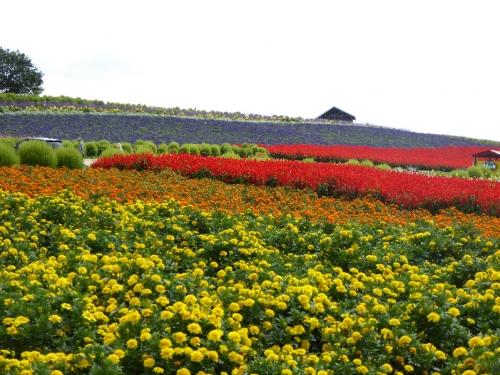 img2015-08-K-ai-Hoshino09.jpg