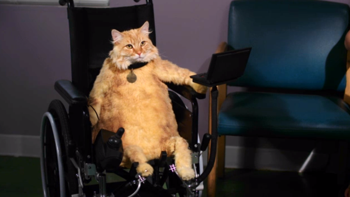 swardson_wheelchair_720.png