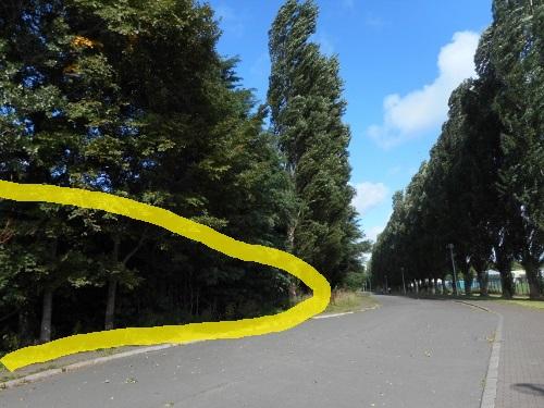 北大富士 平成ポプラ並木側から