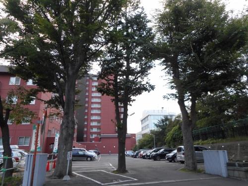 料亭鴨川跡 庭園の樹?