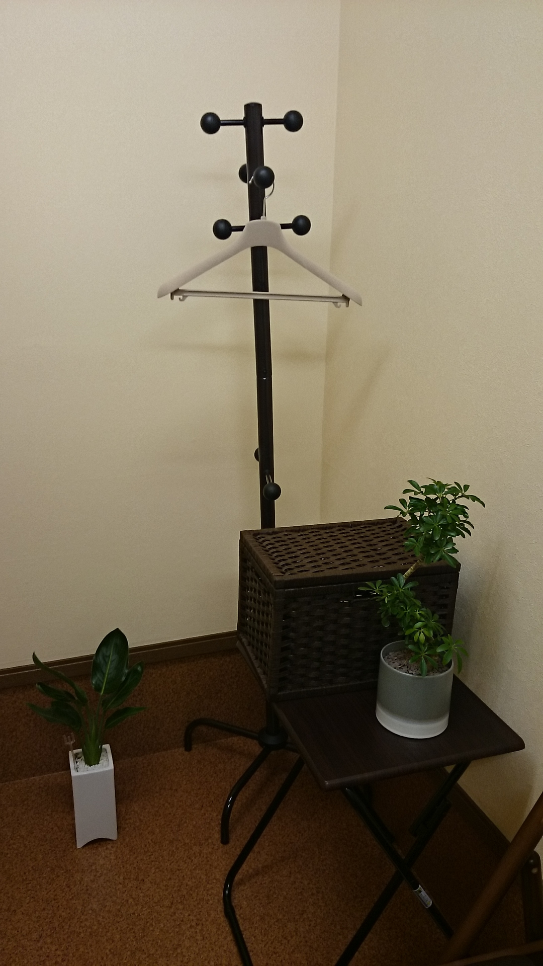遠藤先生から頂いた観葉植物