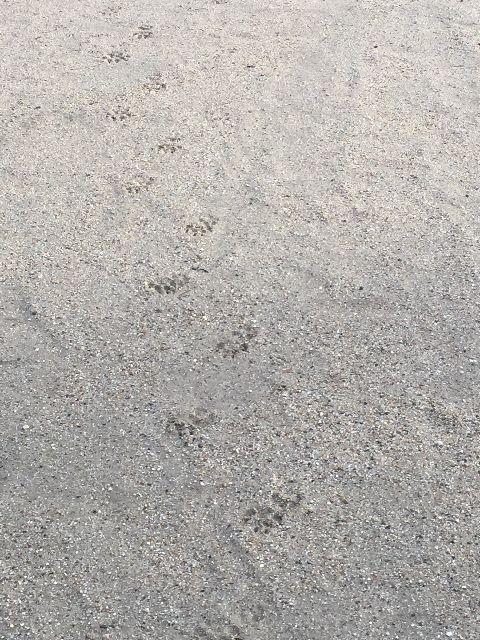 とわの足跡