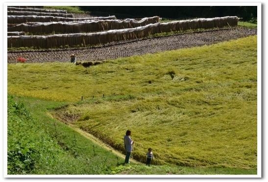 茂木 石畑の棚田