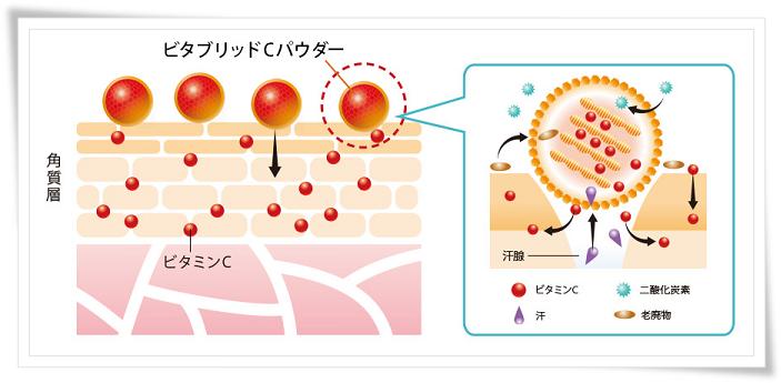 ビタブリッドC 肌への作用
