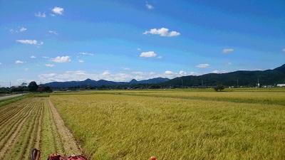 20150920稲刈り