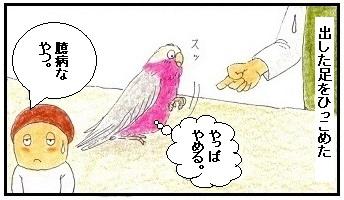 人見知りの鳥4