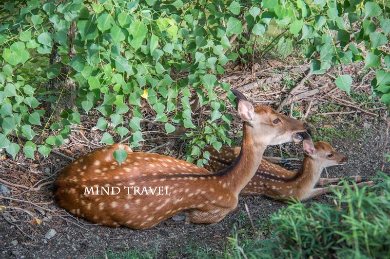 奈良公園 鹿の親子