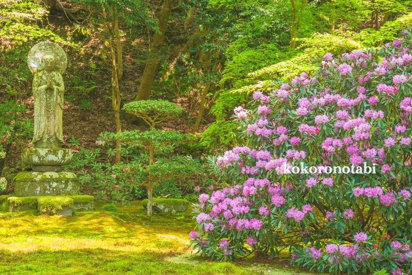 三千院 石楠花