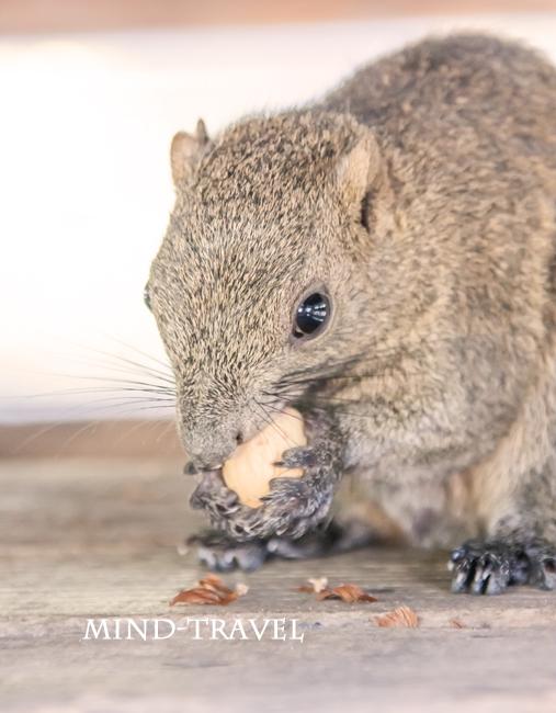 タイワンリス 木の実を食べる