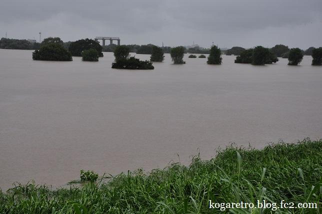 大雨の渡良瀬川5