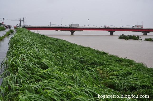 大雨の渡良瀬川4