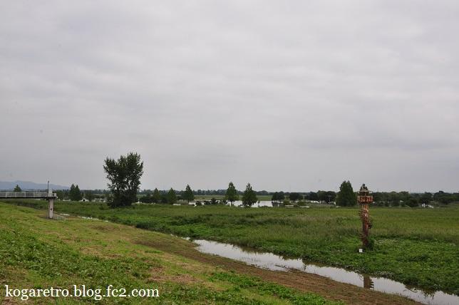大雨の後の遊水地(2)7
