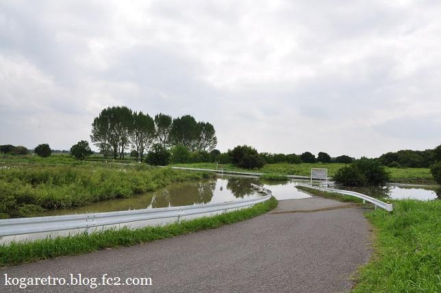 大雨の後の遊水地(2)6
