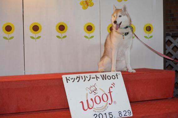 150830 Woof01