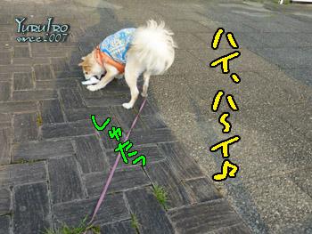 yuruiro20150825_k001