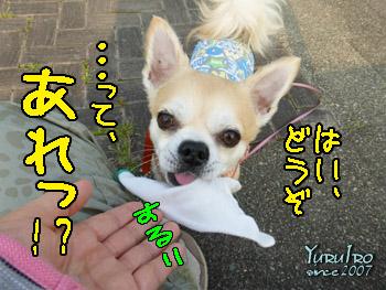 yuruiro20150825_k003
